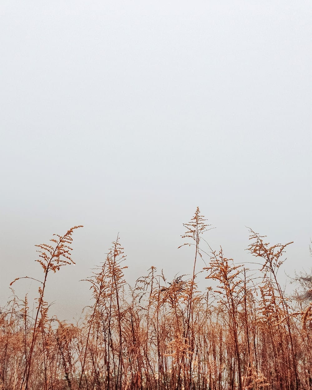 minimal style winter image of orange reed taken with fog and rain