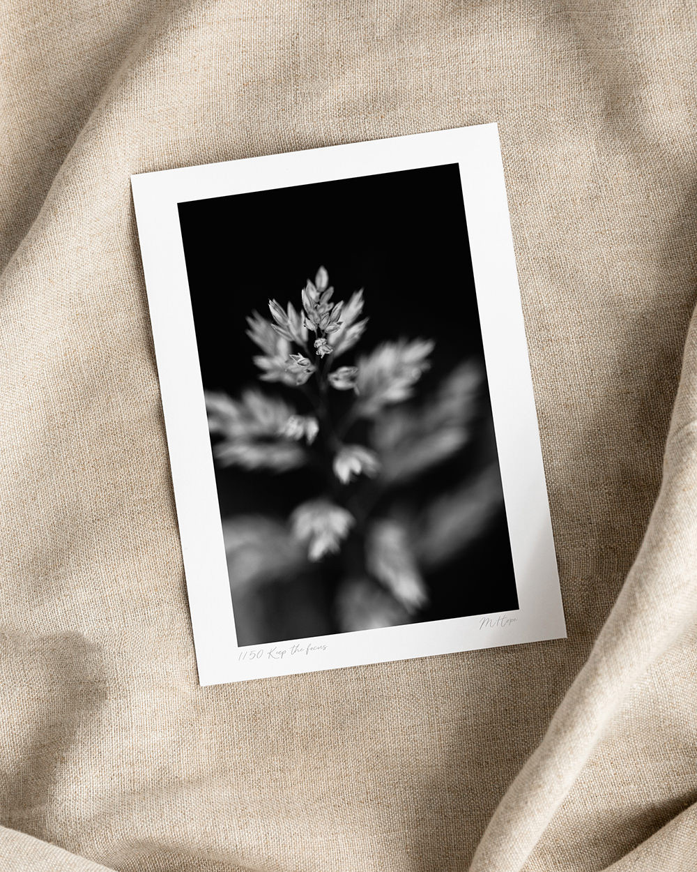 Limited edition photography print, signed, black and white macro flower